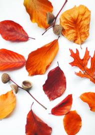 A4 fotoprint - Rode bladeren