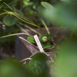 Plantenlabels van hout - Groente