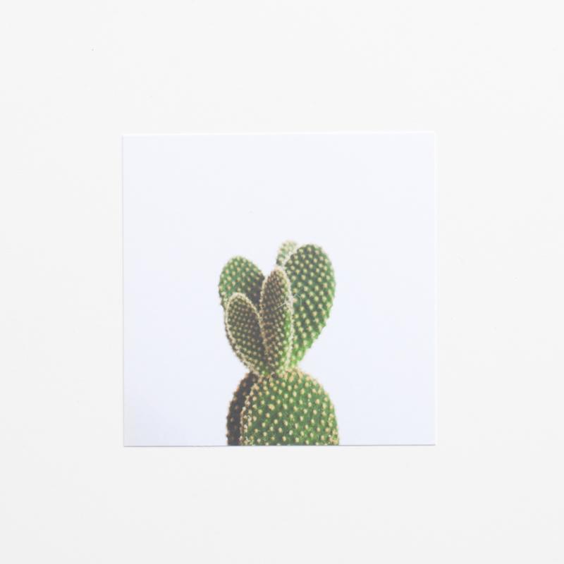 Cactus 10x10 cm