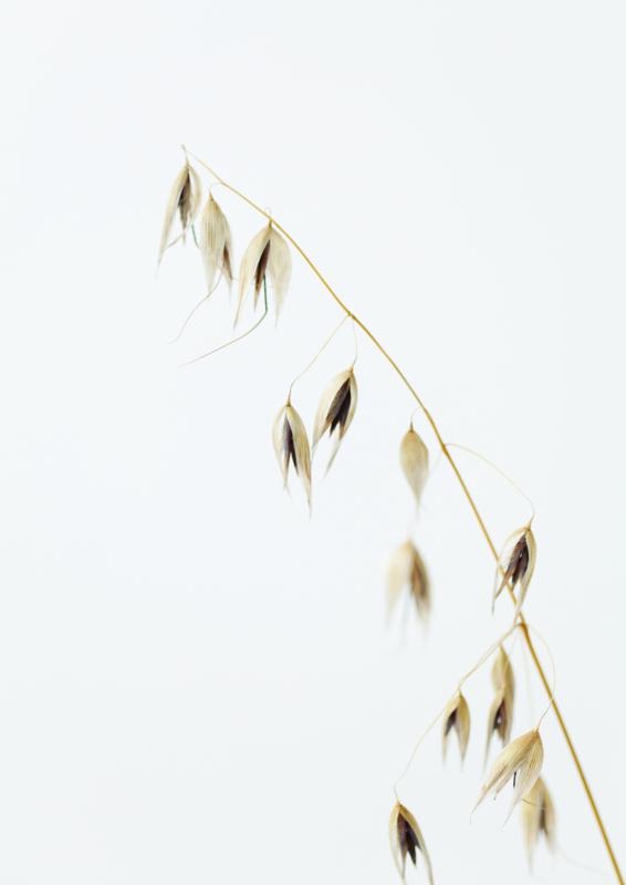 A4 fotoprint 'Wilde Haver'
