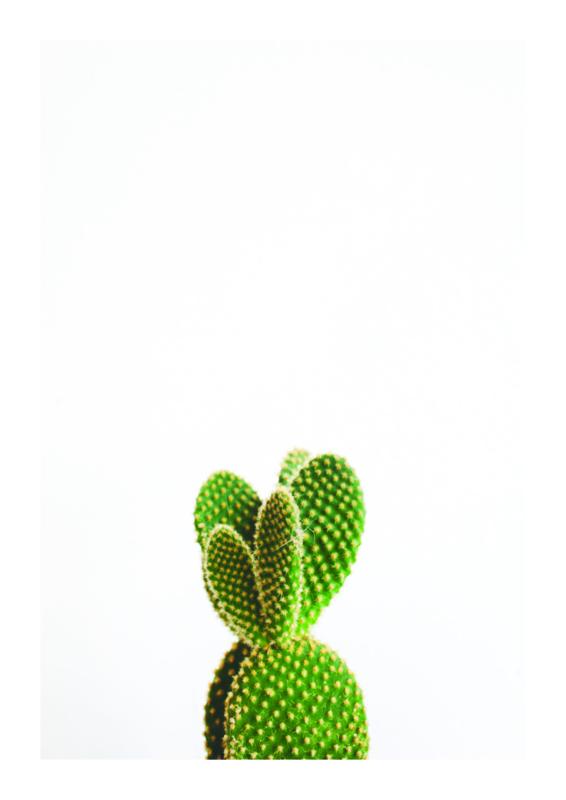 A4 poster Cactus