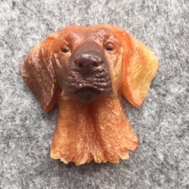 Ierse setter hond ?