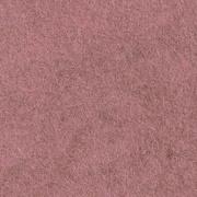 CP013 rose camay