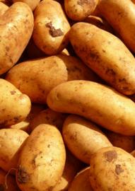Franse La Ratte aardappel 1KG