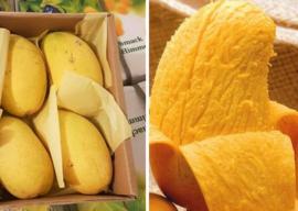 Suiker Mango extra sweet per stuk