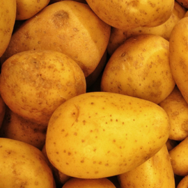 Nicola aardappel 2.5kg, Vast kokend