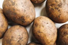 Frieslander aardappel 2.5kg zak