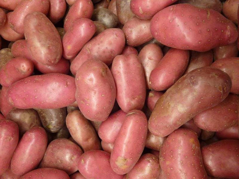Roseval aardappel 1KG, geel vlezig