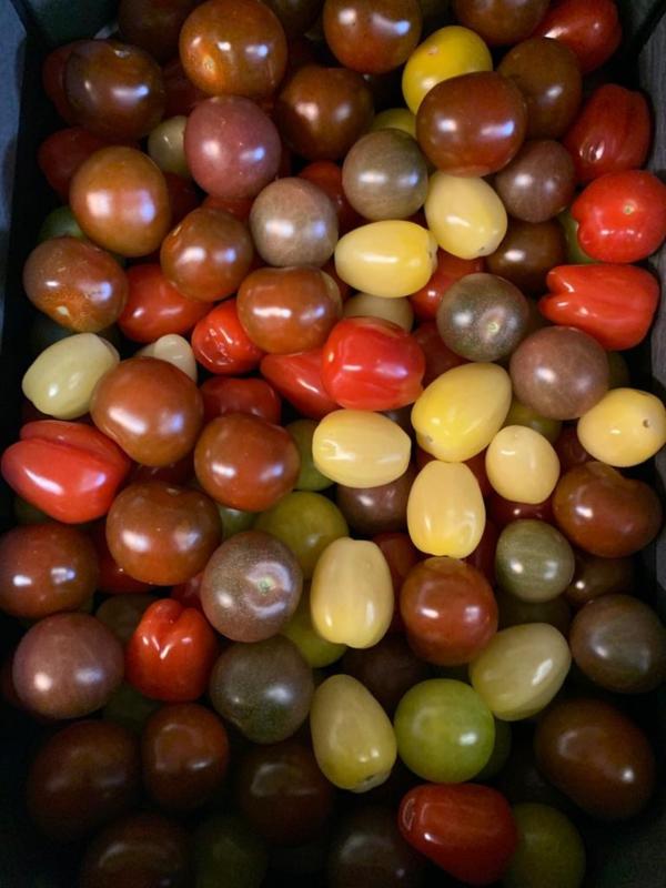 mix kleuren cherry tomaat 250gr