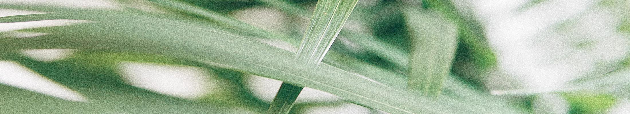 Groene stengels
