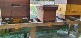 Hive tags (set van 5)