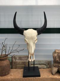 Skull op standaard