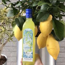 Biologische limoncello