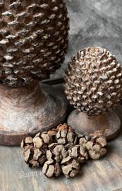Pinus naturel 100 gram