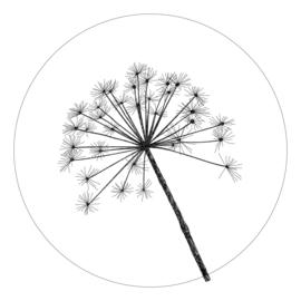 muurcirkel wit met berenklauw 20cm