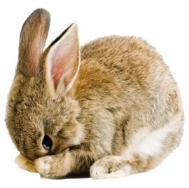 muursticker bruin/grijs konijntje