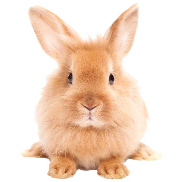 muursticker konijn  beige/bruin