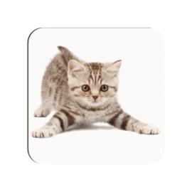 """Onderzetter """"Kitten"""""""