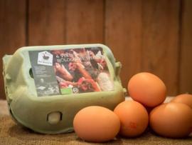 Abonnement 6 bio eieren