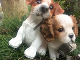 Hondjes puppies