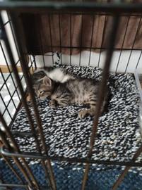 Kittenvoer voor Purr Paws Burgas (Bulgarije)