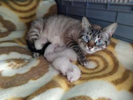 Kittenvoer voor Asoka (Zuid Spanje)