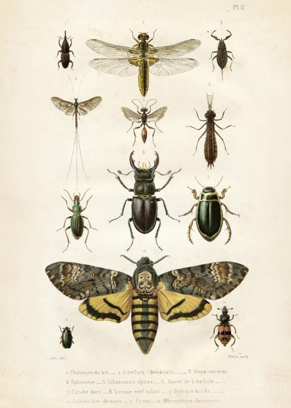 Poster 'insecten' 50 x 70 cm