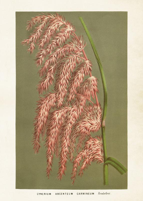 Poster 'cynereum' 50 x 70 cm