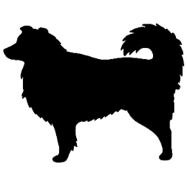 "Australian Shepherd ""Aussi"" 2"