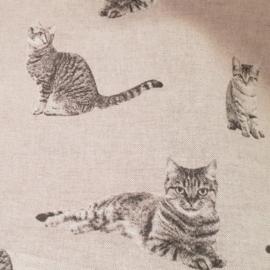 grijze katten