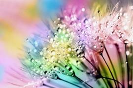 Bijntjes Nectar in Heaven Type