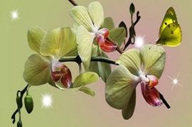 Green Fig and Vanilla Cream