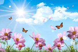 Sunshine and Breezes