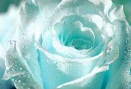 Ice Ice Brrr L.Type