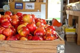 Apple - Appels
