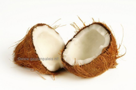 Fractionated Coconutoil
