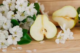Blossoms of Anjou Pears