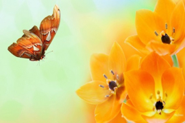 Blossoms are Orange JM.Type
