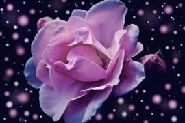 Goddess of Roses L.Type