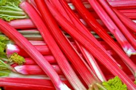 Rhubarb - Rabarber