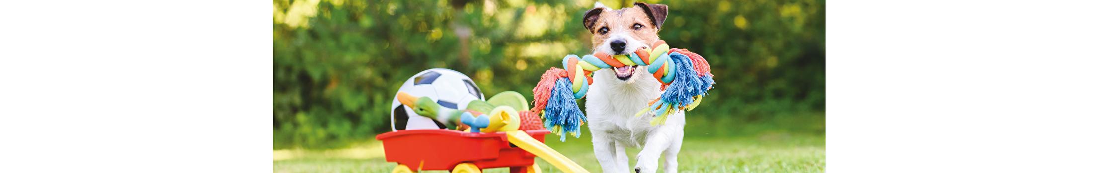 Hokati Hondenprodukten