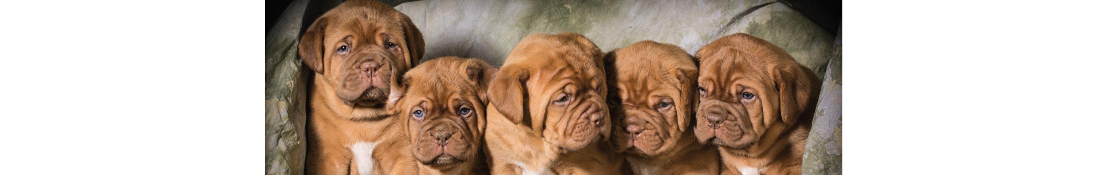 Speciaal voor puppy's