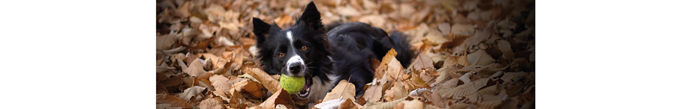 Interactief speelgoed Honden