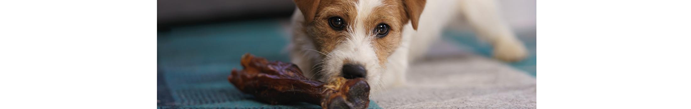 Honden Beloningen & Snacks