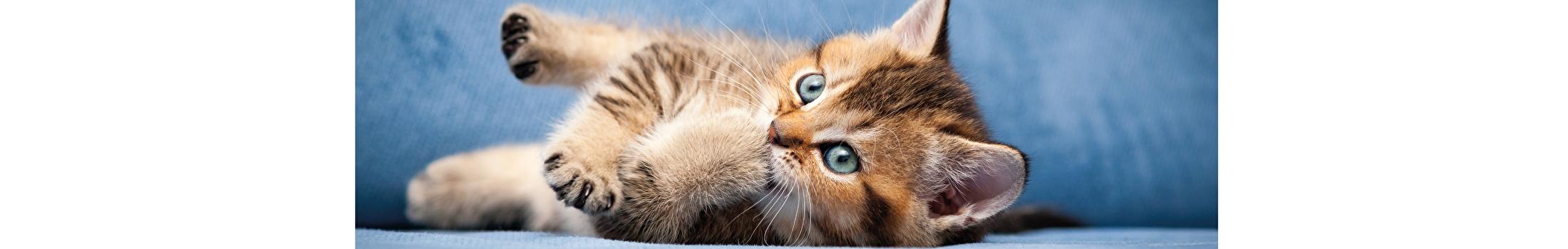 Interactief speelgoed Katten