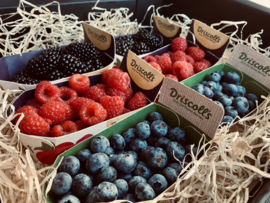 VERSE rode vruchten pakket