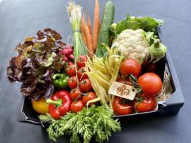 VERSE groenten van Belgische bodem, puur vakmanschap !