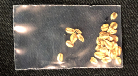 Packet of Giant Sequoia seeds