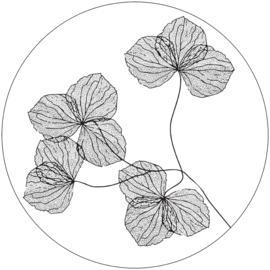 Wooncirkel gedroogde bloemen wit - 40 cm
