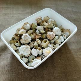 Bakje witte/groen/bruine kleine schelpen